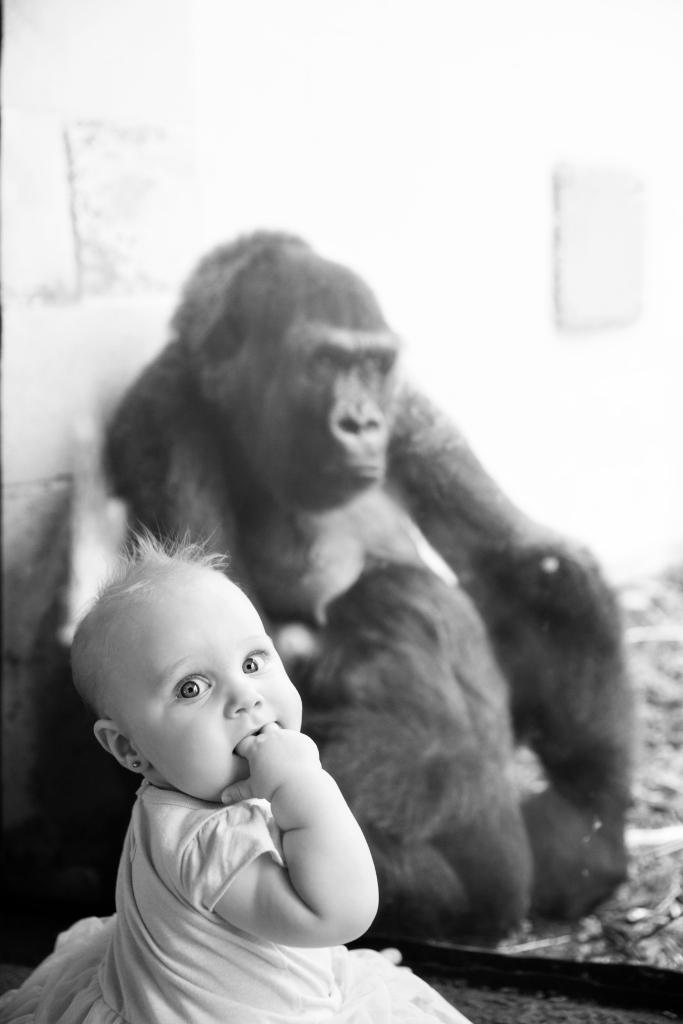 KC Zoo_31bw
